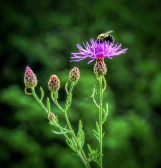 Ecosystems ©Jackie Brooks