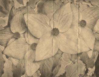 Folded Drawing ©Jackie Brooks