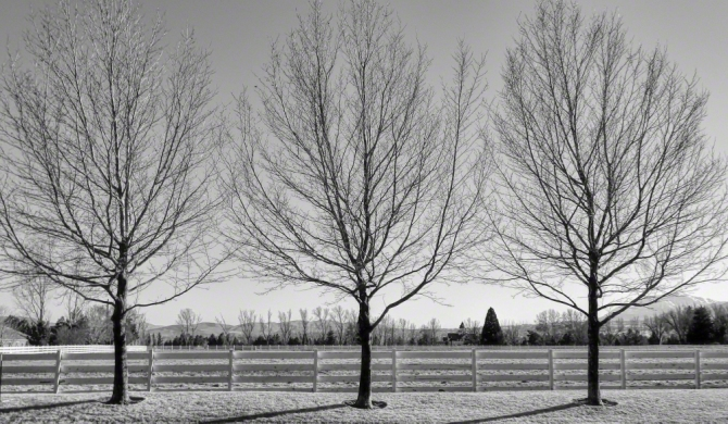 Three Trees in Winter ©Jackie Brooks